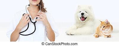 chien, concept., vétérinaire, isolé, chat, vétérinaire, fond, vide, blanc, stéthoscope, soin