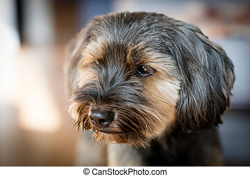 chien, courant, autour de, les, yard, à, home., maison, animaux, sur, a, arrière-cour, lawn.