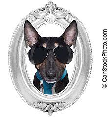 chien, dans, a, cadre