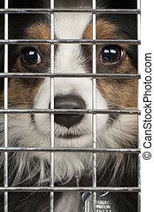 chien, dans, a, cage