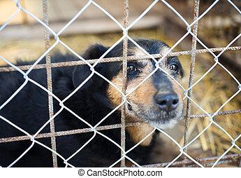 chien, dans, cage