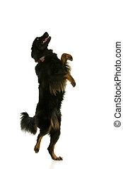 chien, danse