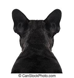 chien, dos, torse