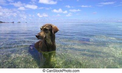 chien, eau océan, indien, mer, ou