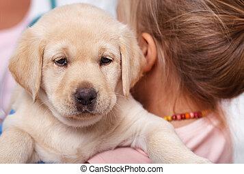 chien, elle, tenue, mignon, labrador, girl, peu, chiot