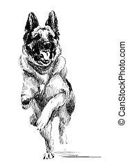 chien, encre, courant, portrait, berger, allemand