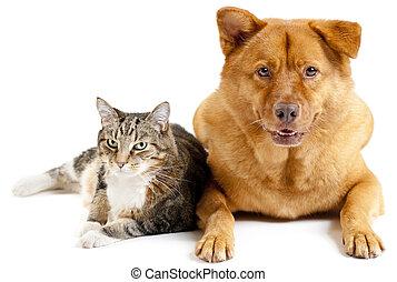 chien, ensemble, chat
