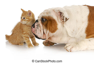 chien, et, chat