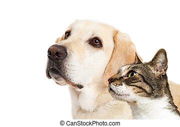 chien, et, chat, ensemble, closeup, regarder, côté
