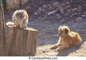 chien, et, chat, meilleurs amis, jouer ensemble, outdoor.