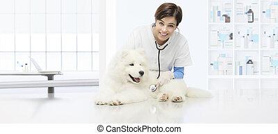 chien, examen, vétérinaire, vétérinaire, clinique, stéthoscope, table, vétérinaire, sourire