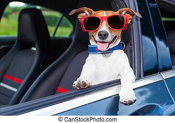chien, fenêtre, voiture