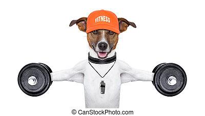 chien, fitness