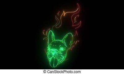 chien, flamme, vidéo, tête, carlino