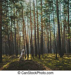 chien, forêt, jeune