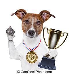 chien, gagnant