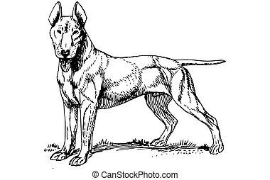 chien, grand