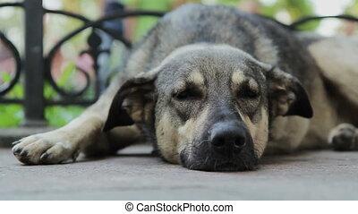 chien, grand, sillage, que, dormir, haut