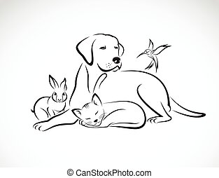 chien, groupe, animaux familiers, chat, -, oiseau, isolé,...
