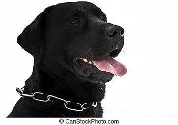 chien, heureux