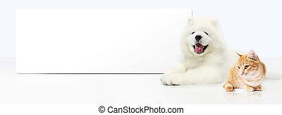 chien, isolé, chat, fond, vide, blanc, bannière