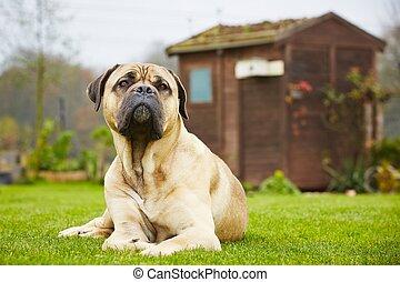 chien, jardin