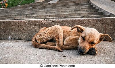 chien, jeune, errant, dormir