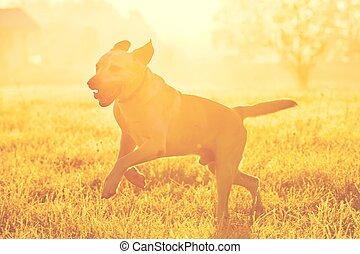 chien, levers de soleil