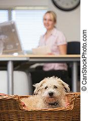 chien, mensonge, dans, bureau maison, à, femme, dans, fond