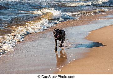 chien, mer