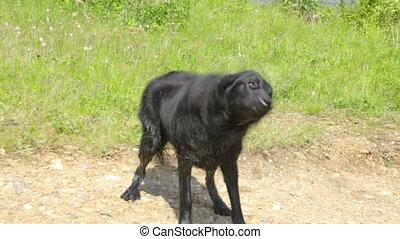 chien, mouillé, fermé, eau, secousse