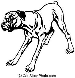 chien noir, boxeur, blanc