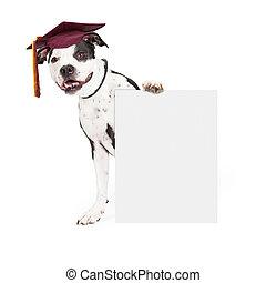 chien, obéissance, école, diplômé, tenue, signe blanc