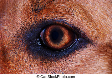 chien, oeil, dans, macro