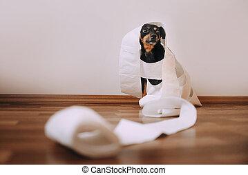 chien, papier, peu, enchevêtré, toilette, obtenu