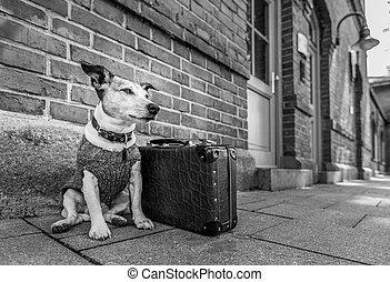 chien perdu, abandonnés