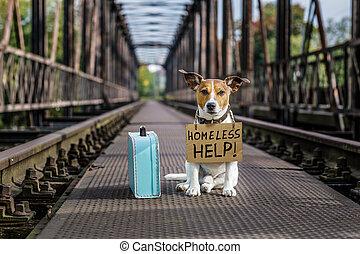 chien perdu, abandonnés, sdf