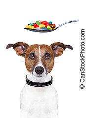 chien, pilules, régime