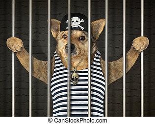 chien, pirate, barres, derrière