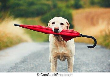 chien, pluie