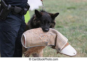 chien policier