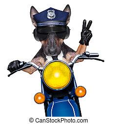chien policier, moto