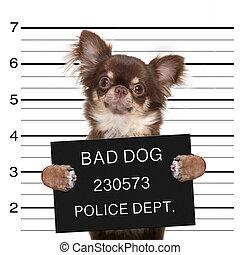 chien policier, mugshot