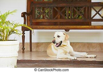 chien, porche