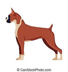 chien, purebred, animal, chouchou, illustration, boxeur, vue côté, vecteur
