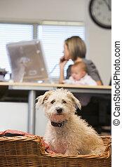 chien, séance, dans, bureau maison, à, tenue femme, bébé, dans, fond