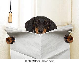chien, séance, toilette