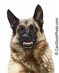 chien sauvage
