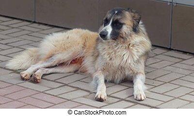 chien, sdf, reposer, mur, ombre, errant