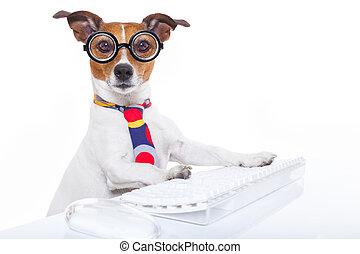chien, secrétaire